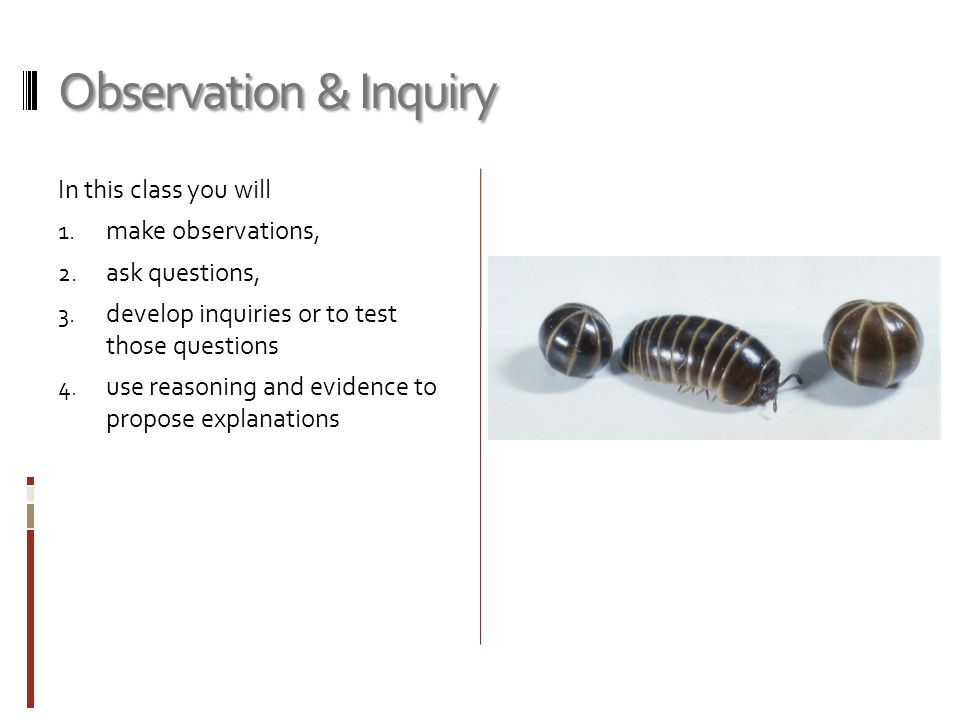 Observation & Inquiry In this class you will make observations,