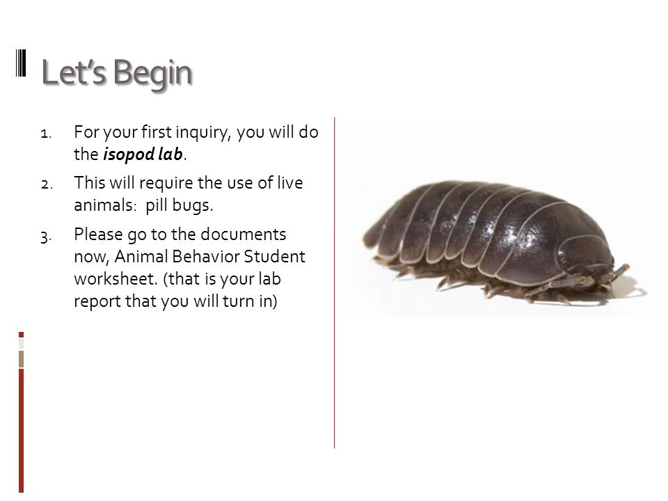 Let's Begin For your first inquiry, you will do the isopod lab.