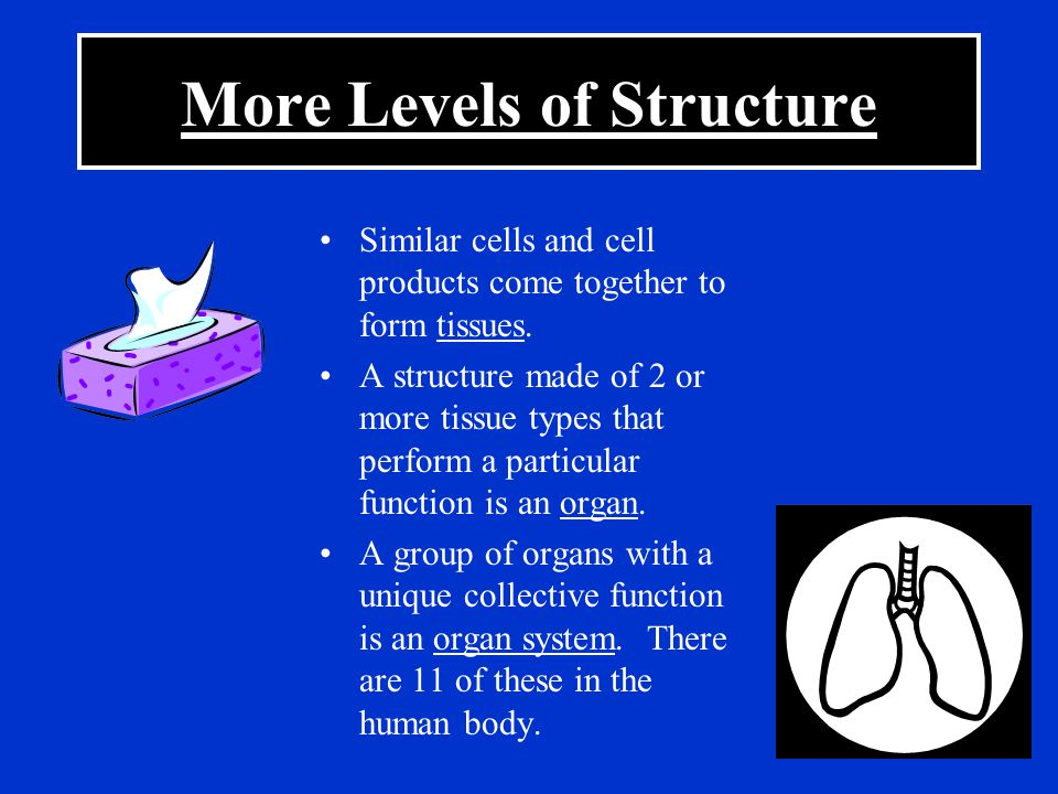 More Levels of Structure