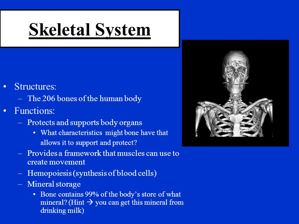 Skeletal System Structures: Functions: The 206 bones of the human body
