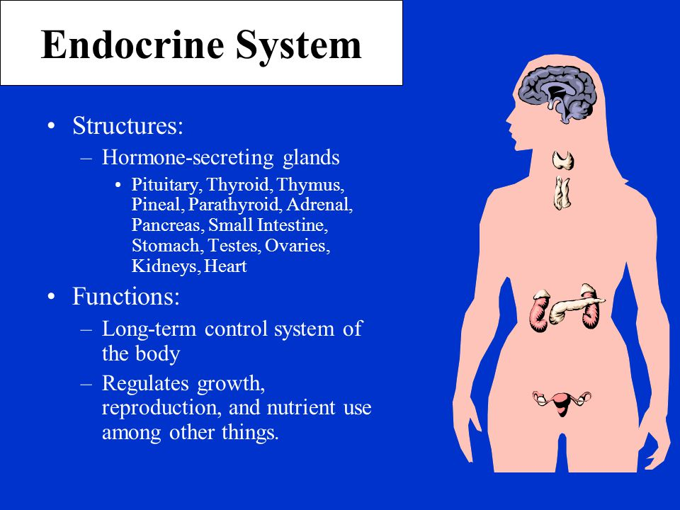 Endocrine System Structures: Functions: Hormone-secreting glands