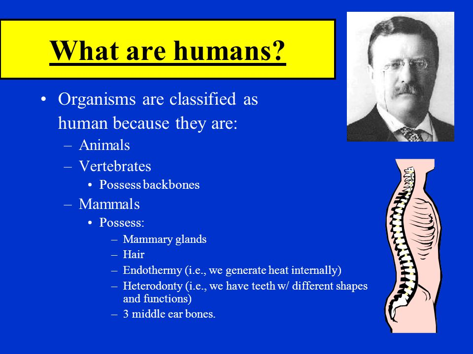 What are humans Organisms are classified as human because they are: