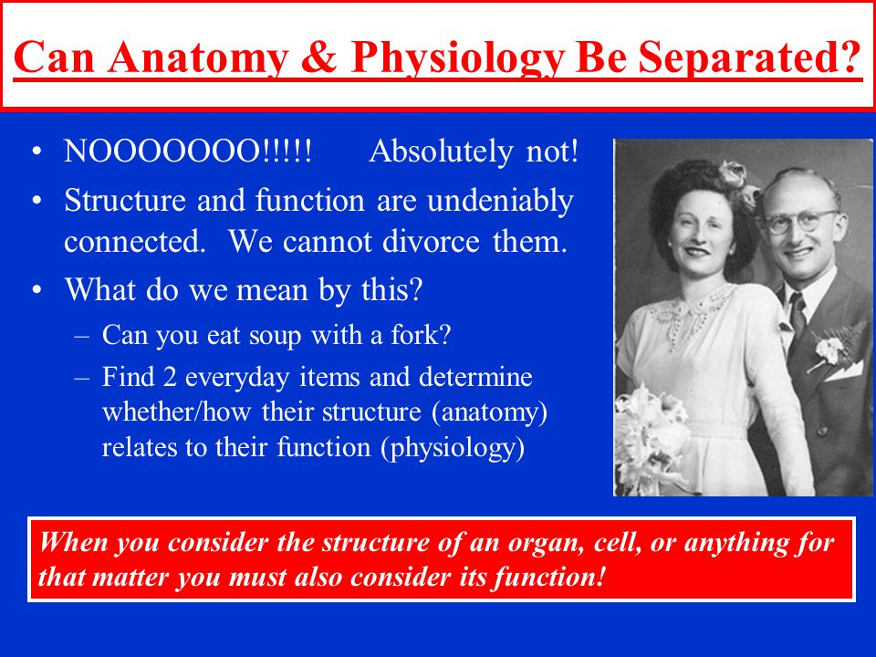 Can Anatomy & Physiology Be Separated