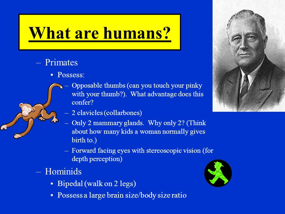 What are humans Primates Hominids Possess: Bipedal (walk on 2 legs)
