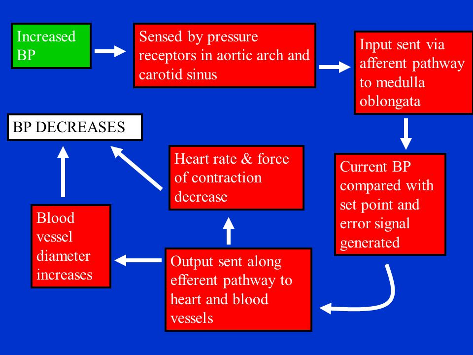 Increased BP Sensed by pressure receptors in aortic arch and carotid sinus. Input sent via afferent pathway to medulla oblongata.