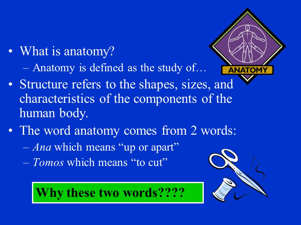The word anatomy comes from 2 words: