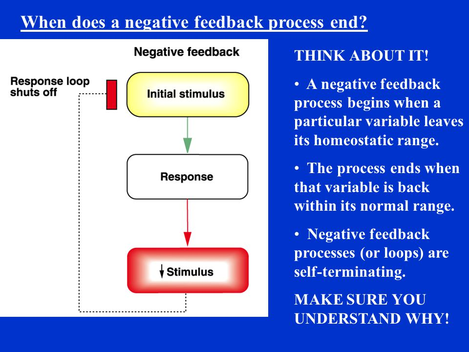 When does a negative feedback process end