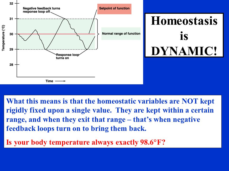 Homeostasis is DYNAMIC!