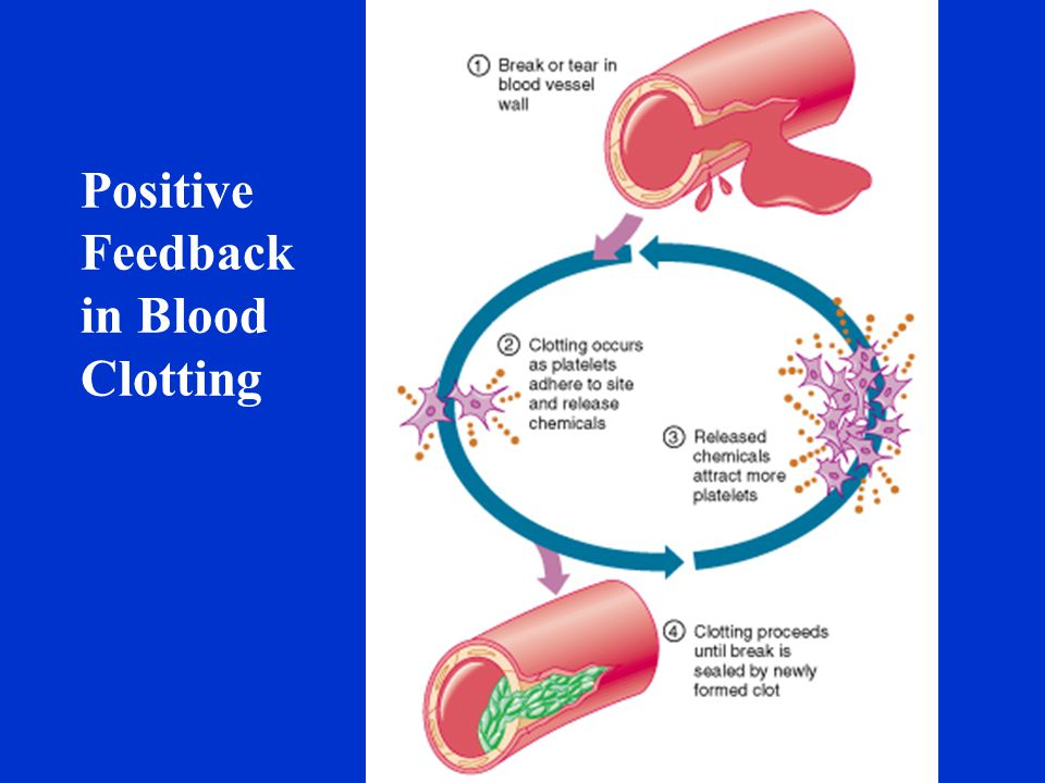 Positive Feedback in Blood Clotting