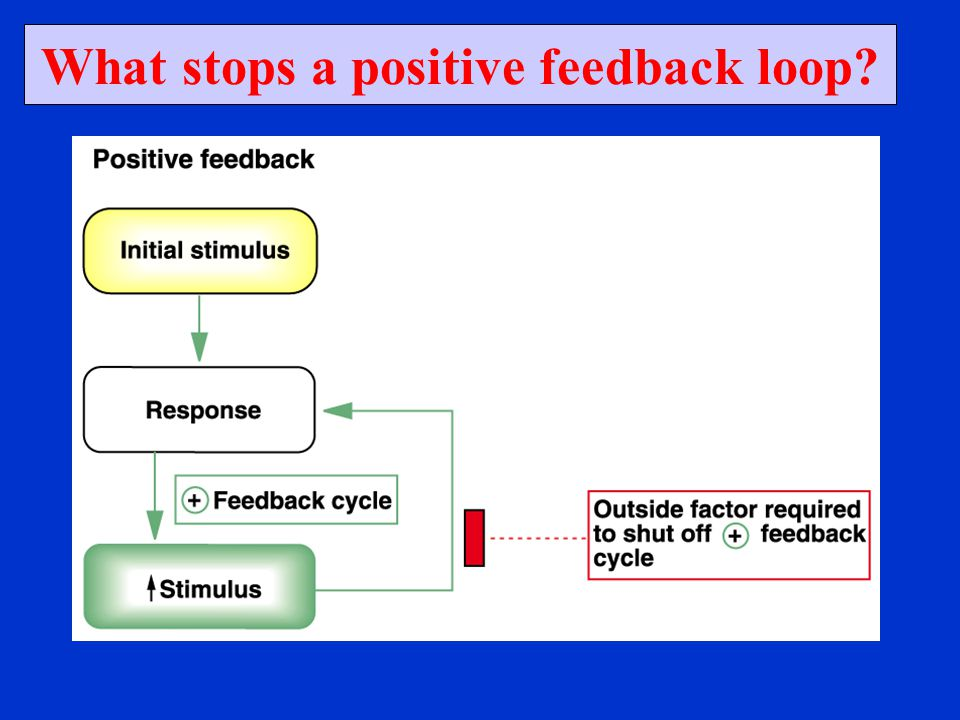 What stops a positive feedback loop