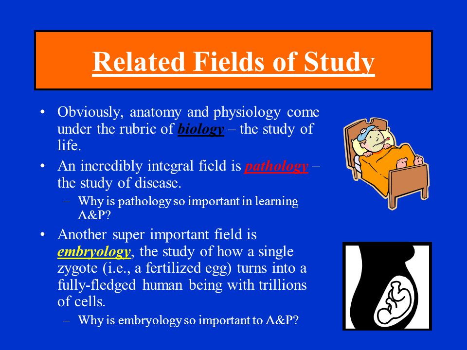 Related Fields of Study