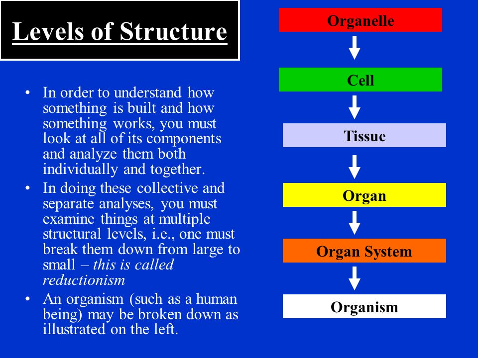Levels of Structure Organelle Cell