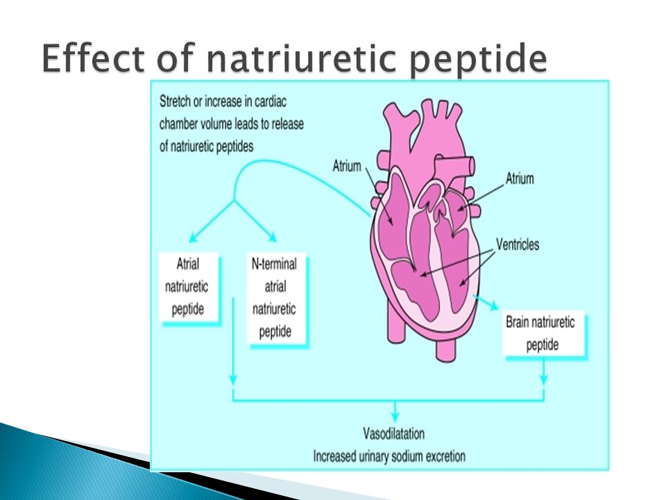 Effect of natriuretic peptide