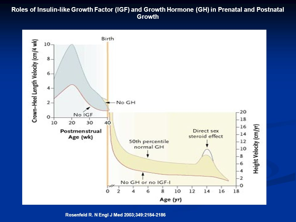 Roles of Insulin-like Growth Factor (IGF) and Growth Hormone (GH) in Prenatal and Postnatal Growth