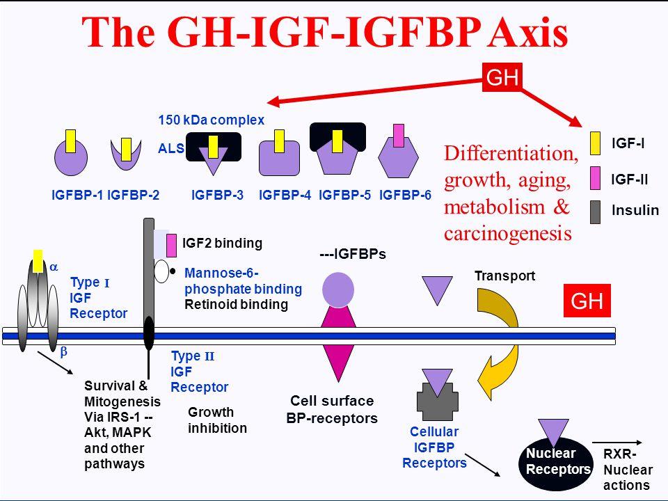 The GH-IGF-IGFBP Axis GH