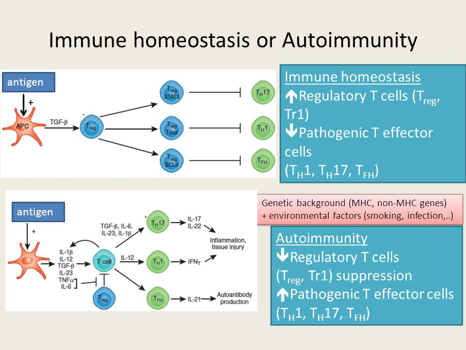 Immune homeostasis or Autoimmunity