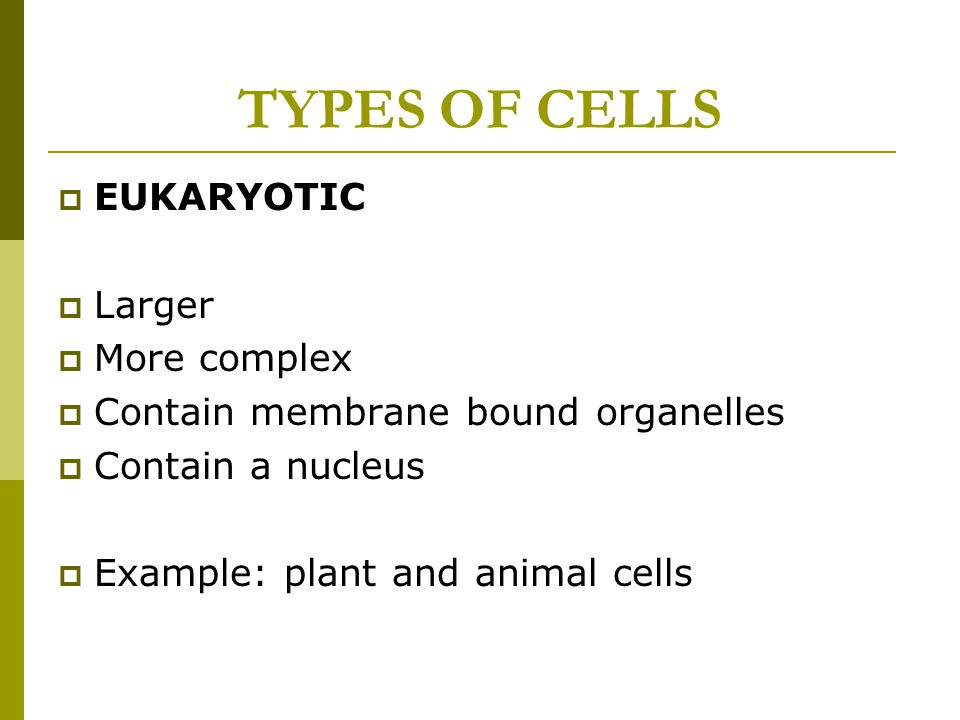TYPES OF CELLS EUKARYOTIC Larger More complex