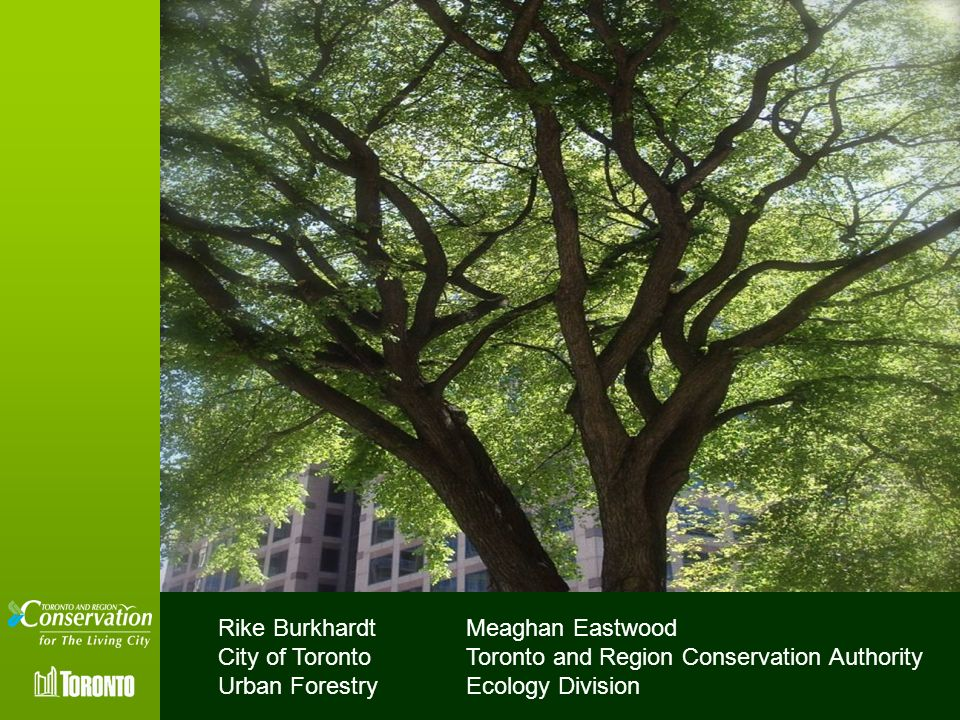 Rike Burkhardt City of Toronto. Urban Forestry. Meaghan Eastwood. Toronto and Region Conservation Authority.