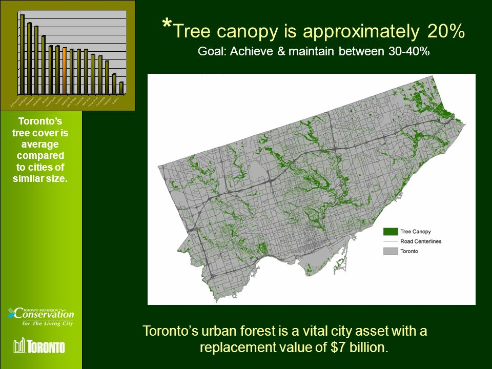 Toronto's tree cover is average compared to cities of similar size.