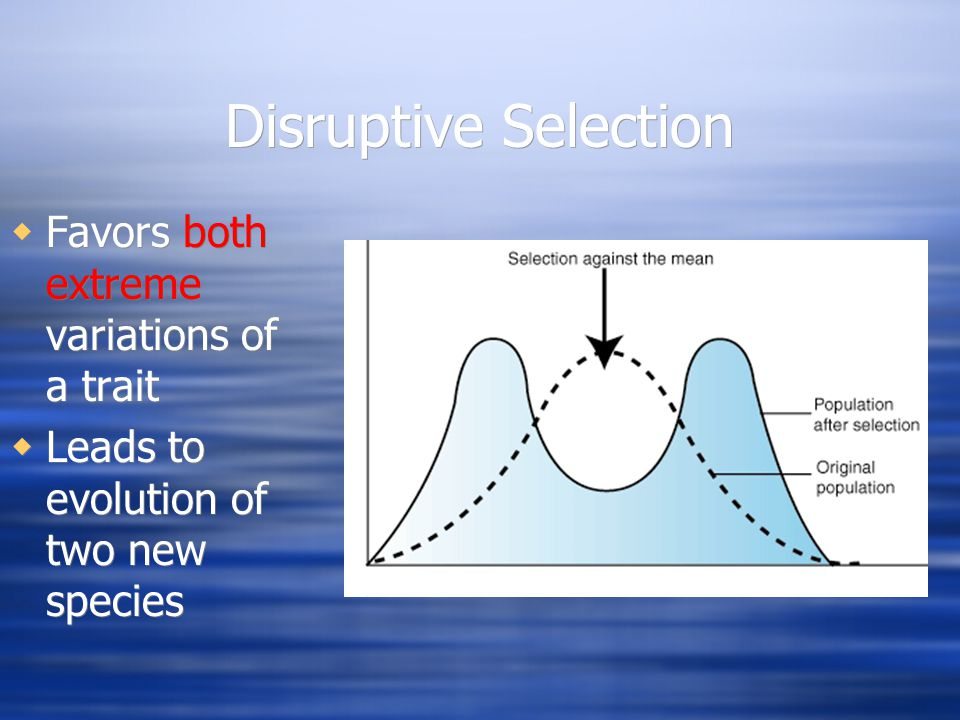 Disruptive Selection Favors both extreme variations of a trait