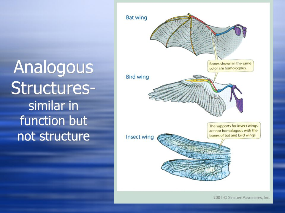 Analogous Structures-similar in function but not structure