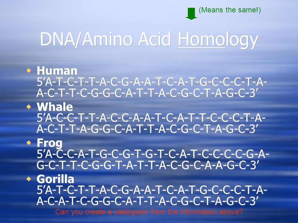 DNA/Amino Acid Homology