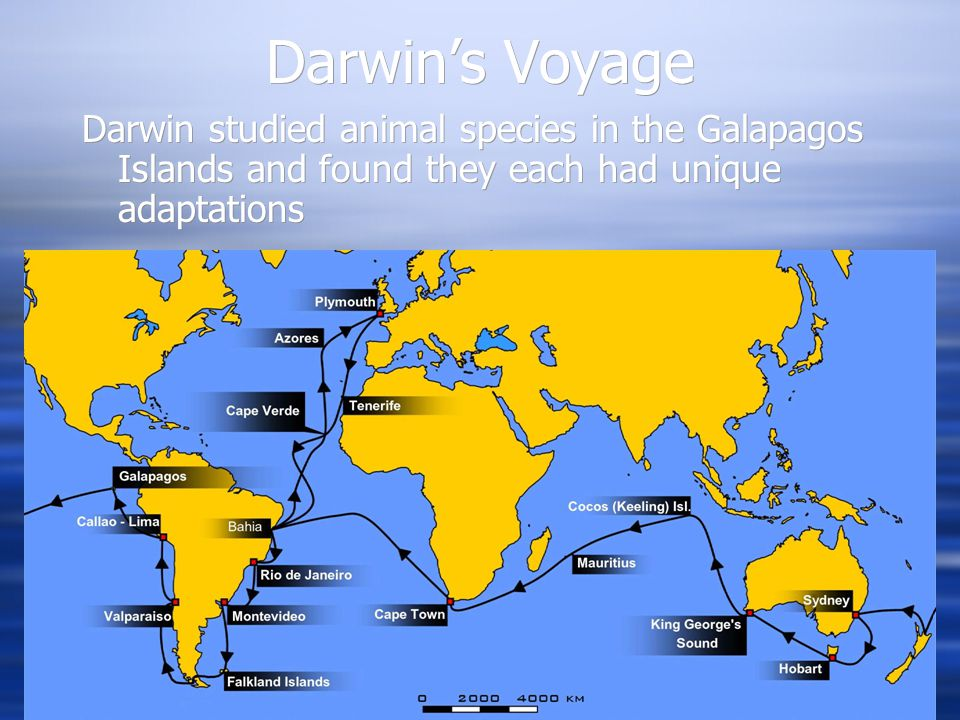 Darwin's Voyage Darwin studied animal species in the Galapagos Islands and found they each had unique adaptations.