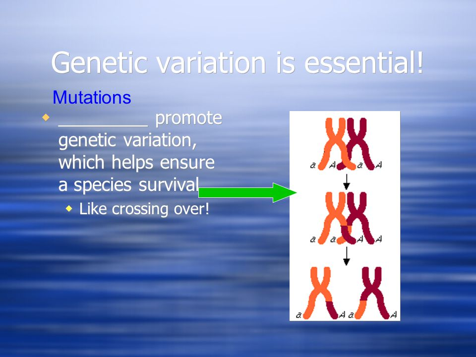Genetic variation is essential!