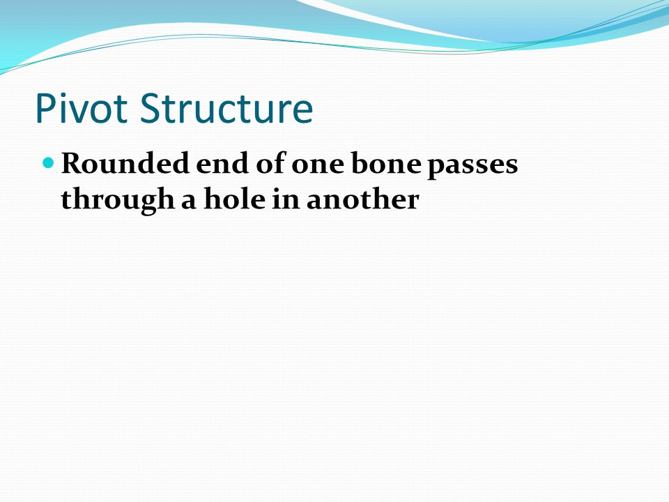 Pivot Structure Rounded end of one bone passes through a hole in another