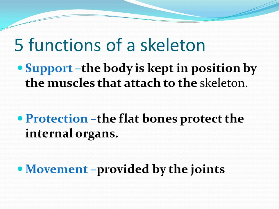 5 functions of a skeleton