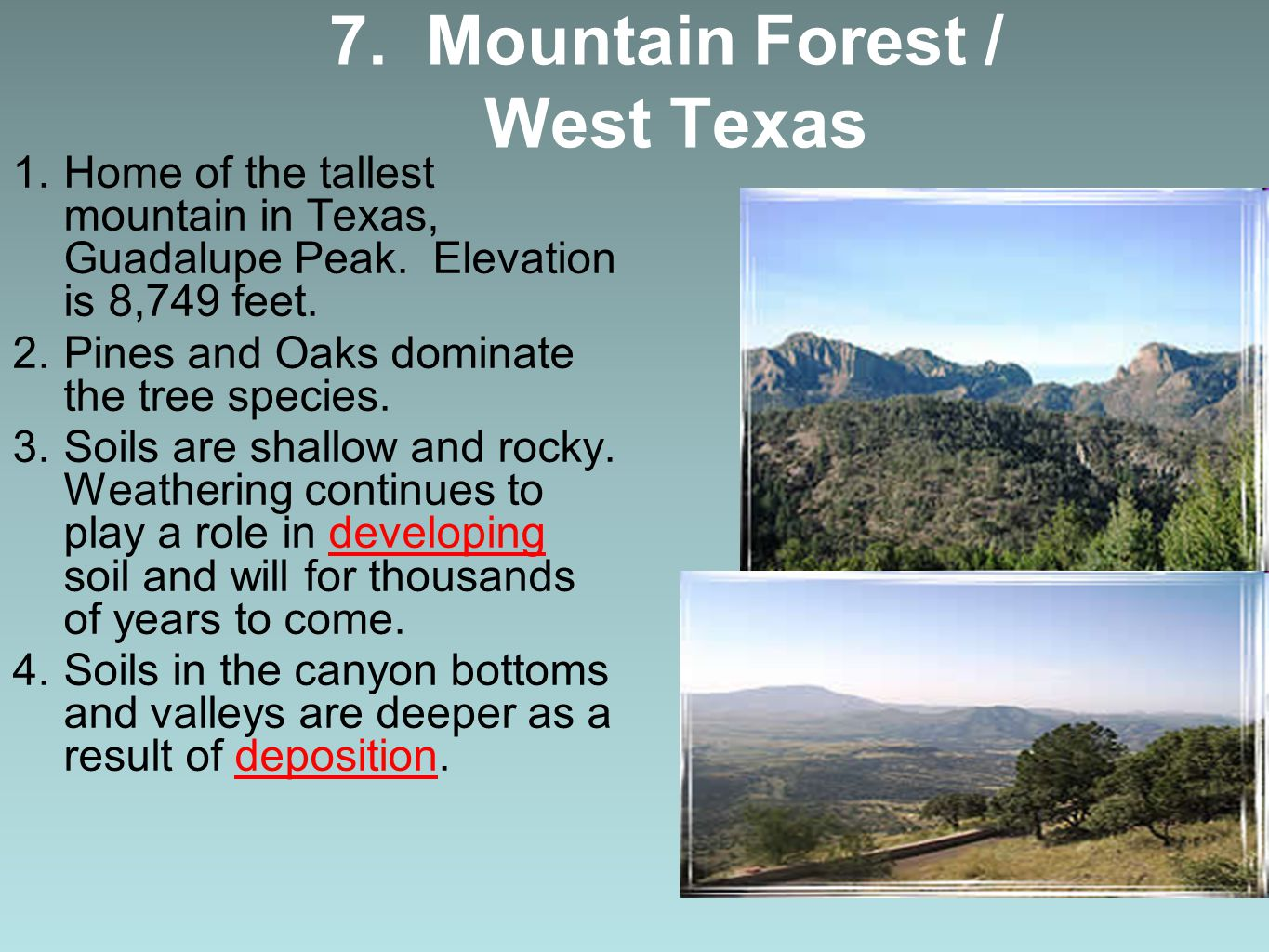 7. Mountain Forest / West Texas