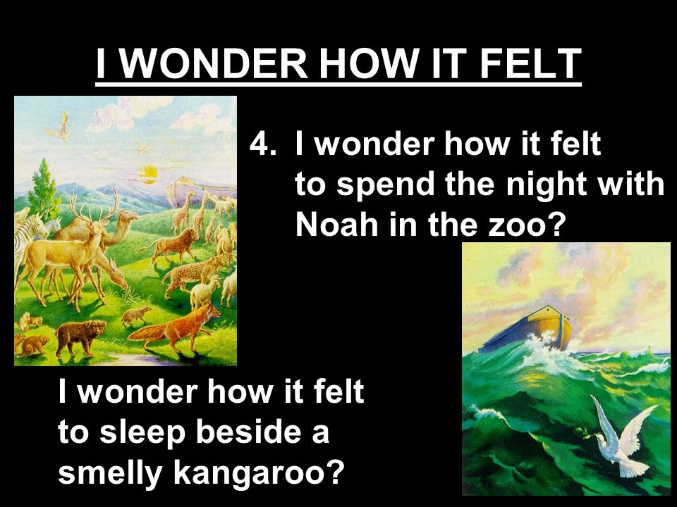 I WONDER HOW IT FELT I wonder how it felt to spend the night with Noah in the zoo.