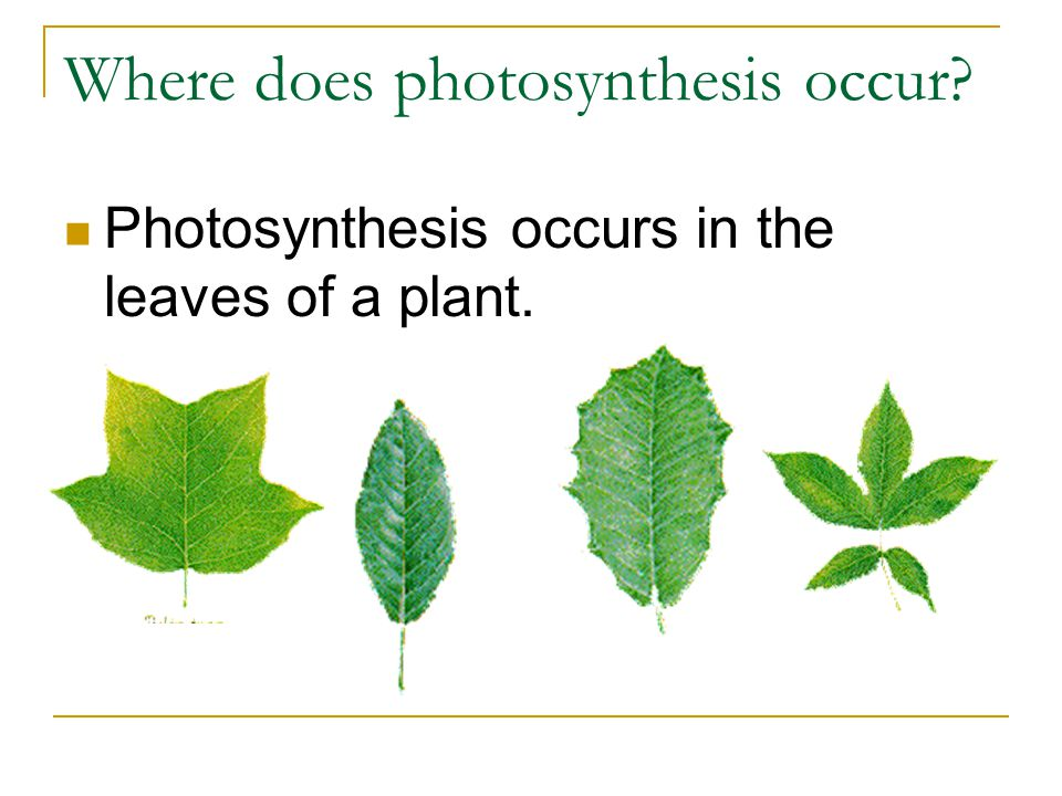 photosythesis occur Equation for photosynthesis photosynthesis is a very complex process it involves many different chemical reactions that occur in a pathway or series, that is, one chemical reaction produces what the next chemical reaction needs.