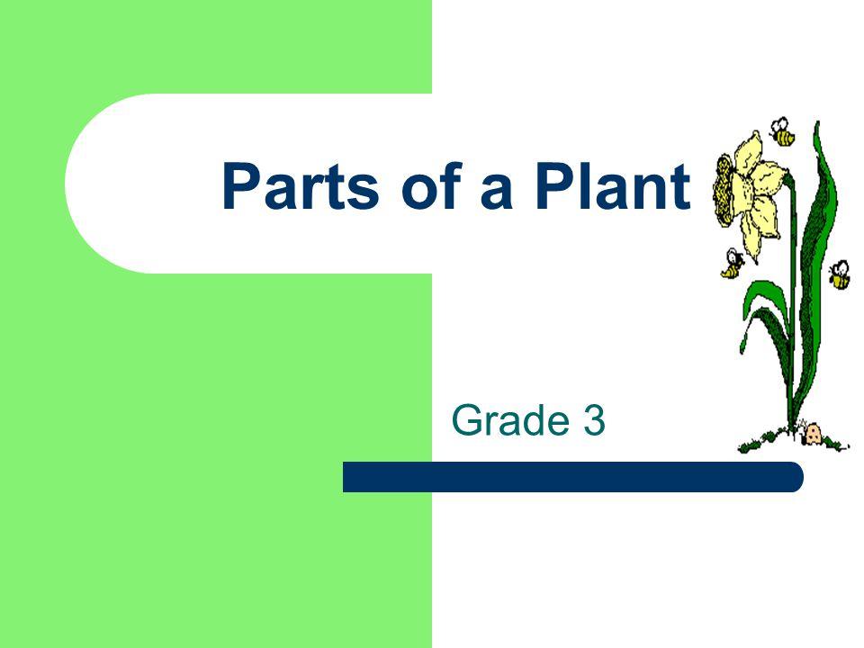 Parts of a Plant Grade 3