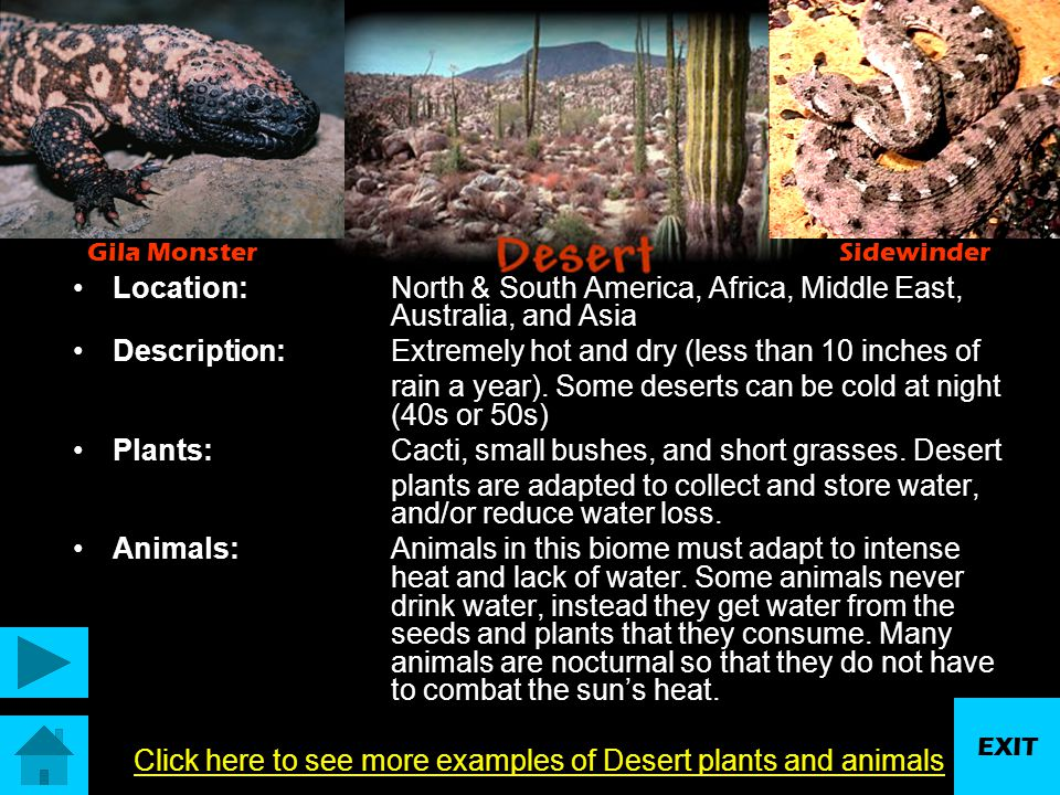 Click here to see more examples of Desert plants and animals