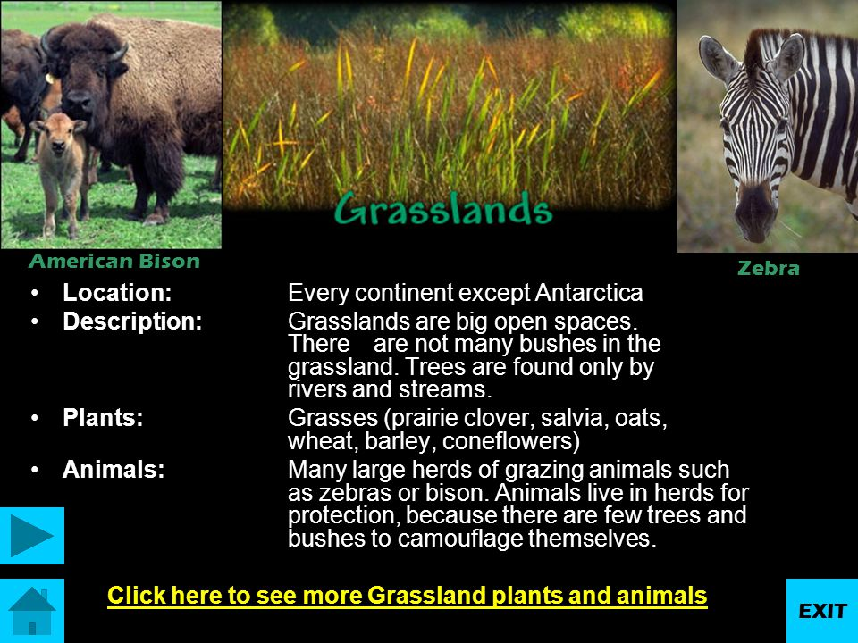 Click here to see more Grassland plants and animals