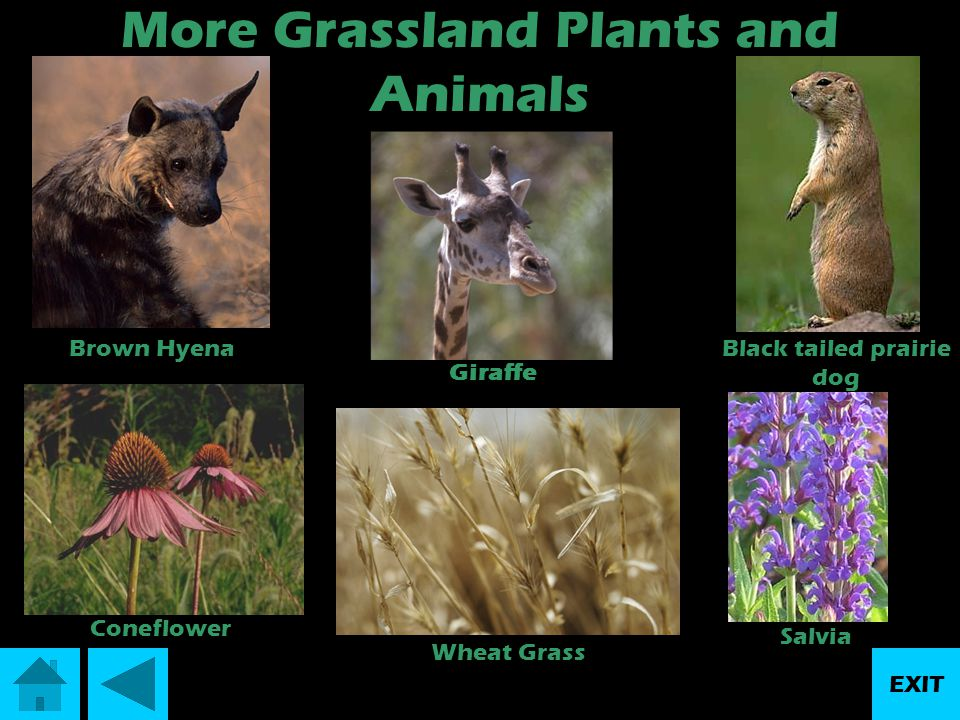More Grassland Plants and Animals