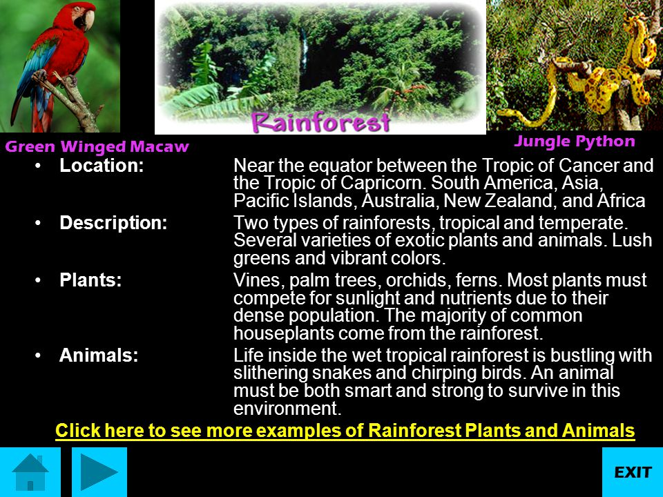 Click here to see more examples of Rainforest Plants and Animals