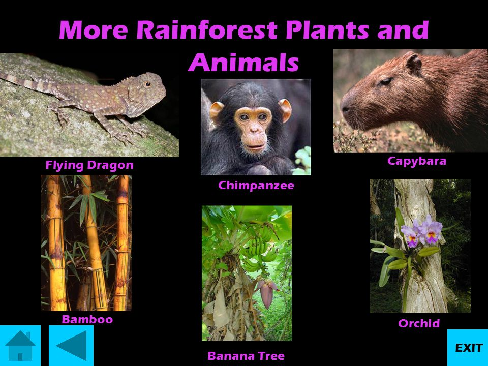 More Rainforest Plants and Animals