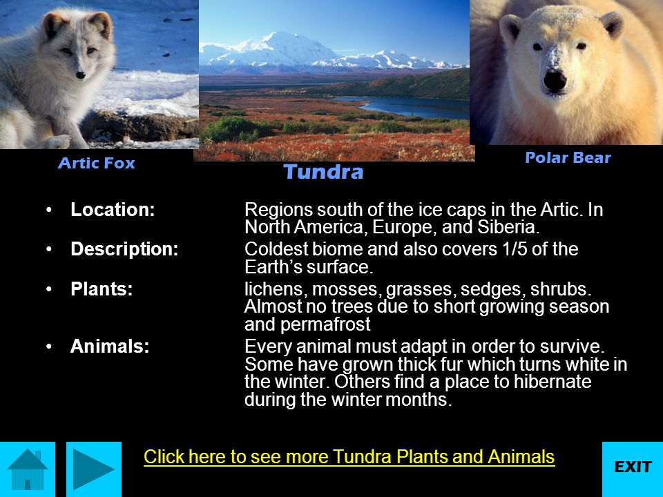 Click here to see more Tundra Plants and Animals