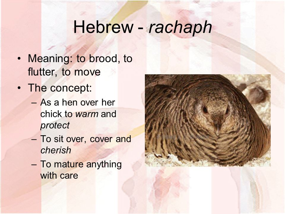 Hebrew - rachaph Meaning: to brood, to flutter, to move The concept: