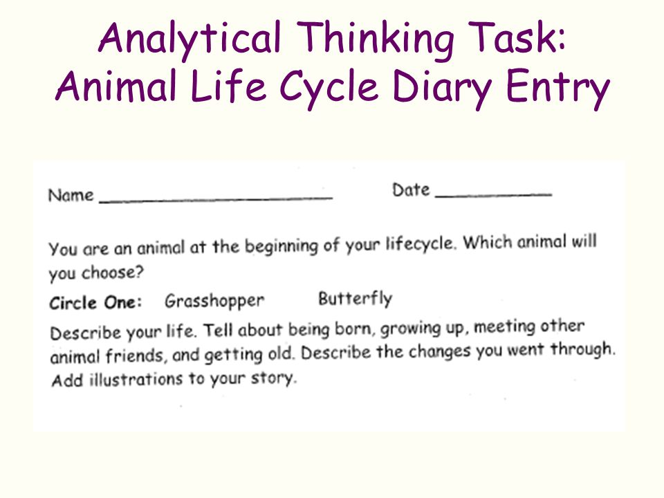 Analytical Thinking Task: Animal Life Cycle Diary Entry