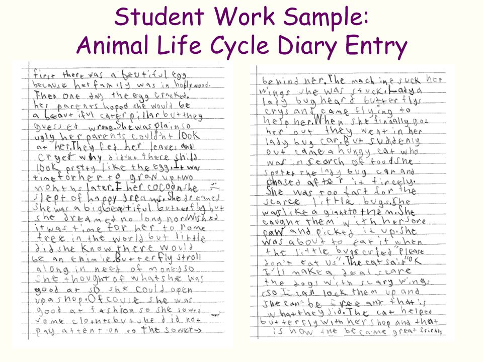 Student Work Sample: Animal Life Cycle Diary Entry