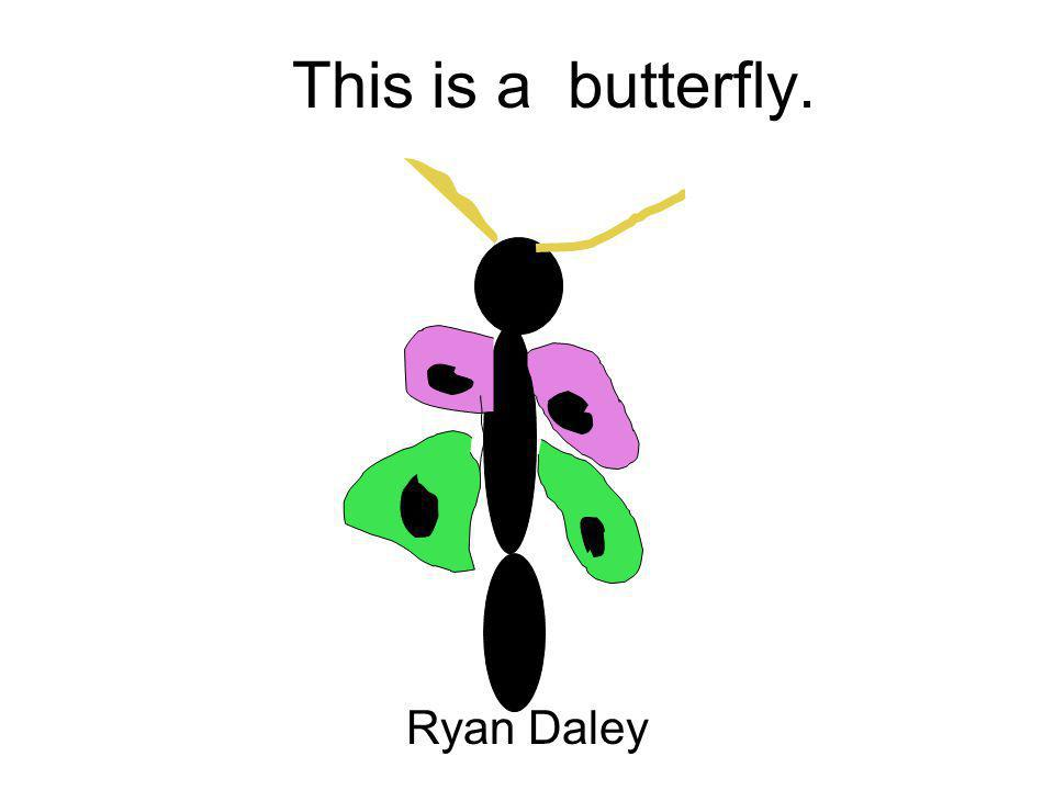 This is a butterfly. Ryan Daley