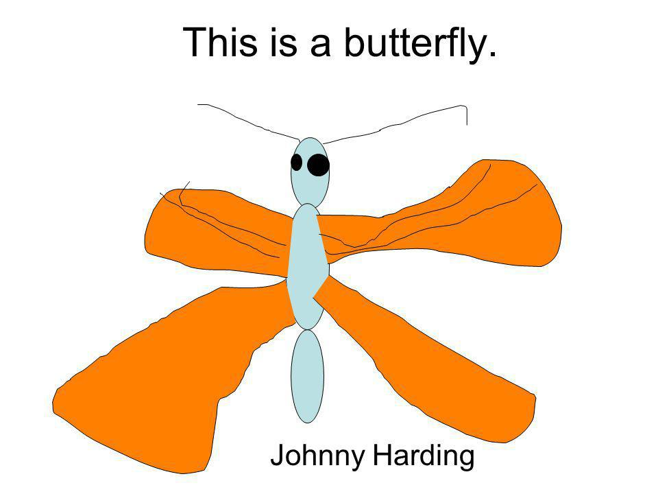 This is a butterfly. Johnny Harding