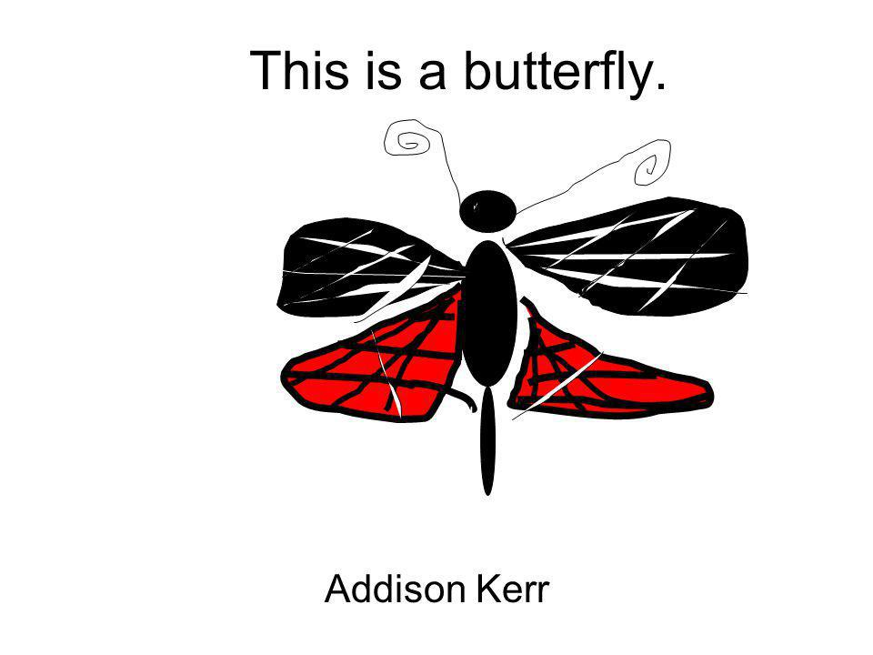 This is a butterfly. Addison Kerr