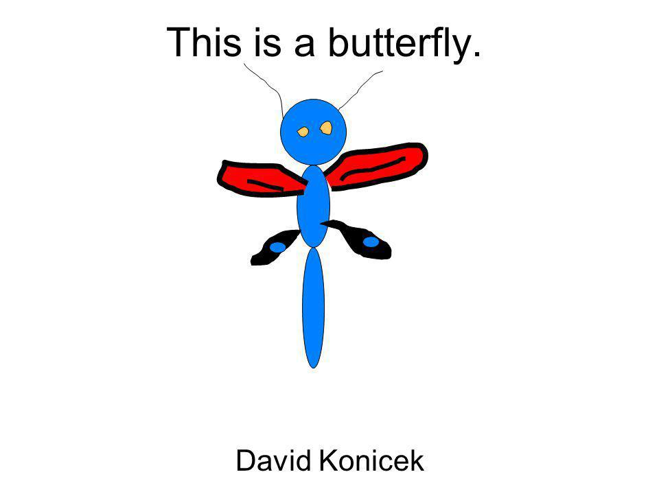 This is a butterfly. David Konicek