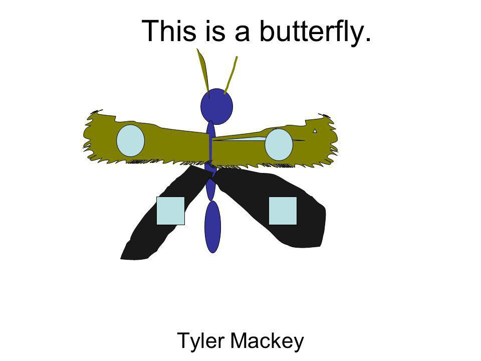 This is a butterfly. Tyler Mackey