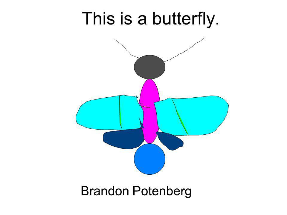 This is a butterfly. Brandon Potenberg