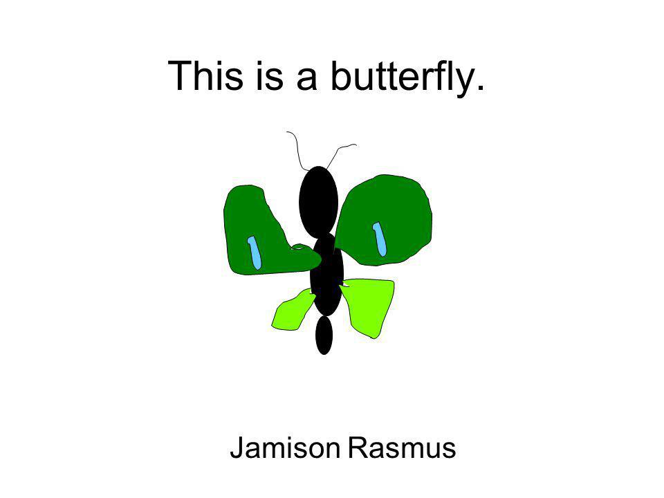 This is a butterfly. Jamison Rasmus